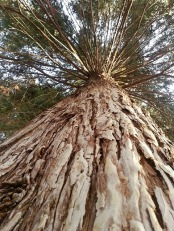 tree-359410_640